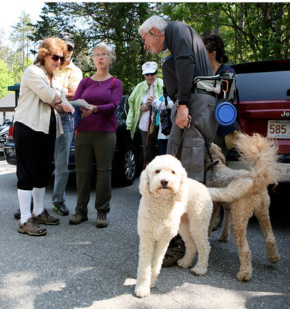 "AMY SWEENEY/Staff photo. <br /> Freddie Piccinni, right, holds Annie and Ozzie, Australian Labradoodles while he looks at a map with Barbara Bartley, left, and Susan Piccole, both from Middleton.  ""They love hiking and they know Wednesday is here,"" Piccinni said about his dogs as they waited for the hike to begin.  ""We haven't missed a week, rain, sun or snow,"" he added.<br /> Harold Parker State Forest hosts walks every Wednesday. May 25, 2016"
