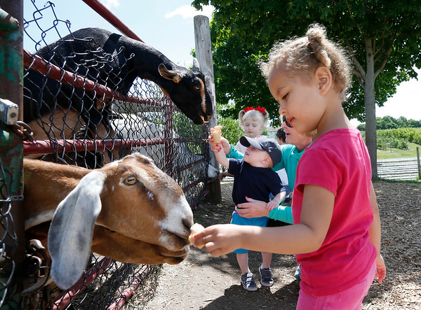 Amara Gordon, 3, of Beverly, right, and Brock McKelvey, 18 months, of Woburn, center, join others as they feed treats to goats at Brooksby Farm in Peabody. Photo by Mary Schwalm