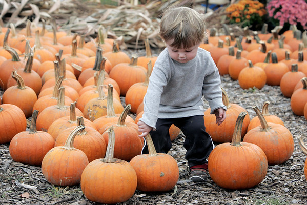 Nikolas Nelson, 1 1/2, of Wakefield, sorts through the pumpkins at Brooksby Farm in Peabody the day before autumn begins. 9/22/15.