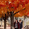 KEN YUSZKUS/Staff photo.   Chloe Quigley and Robert Driscoll walk amongst the autumn colors at Brooksby Farm in Peabody  10/27/15.