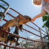 Landrey McKelvey, 4, of Woburn, feeds a cone to a goat at Brooksby Farm in Peabody. Photo by Mary Schwalm