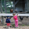 Kids feed treats to birds through a pipe at Brooksby Farm in Peabody. Photo by Mary Schwalm