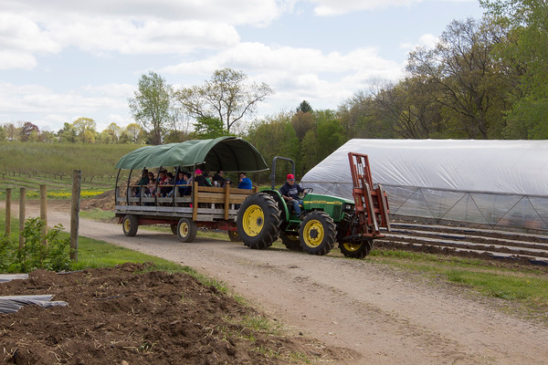 Joe Difazio/ Tractors pulled hay rides through the farm at the Family Festival at Brooksby Farm in Peabody. May 15, 2016
