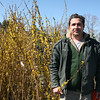 Northeast Nursery manager Chris Barboza stands among the Forsythia that are in bloom at the Peabody nursery.<br /> Forsythia are great to cut and bring in to brighten up your indoors.<br /> Photo by Amy Sweeney