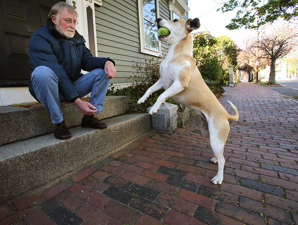 KEN YUSZKUS/Staff photo.      Jim McAllister sits on the front steps of his home on Federal Street and tosses the ball to his dog Butternut.    05/09/16