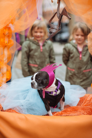 Jared Charney / Photo Stealls sits in her float at the Second Annual Howl-o-ween Pet Parade on Derby Square in Salem, October 2, 2016.