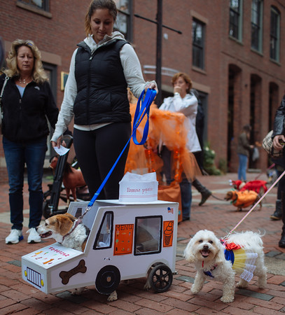 Jared Charney / Photo Emma pulls her ice cream car at the second Annual Howl-o-ween Pet Parade on Derby Square in Salem, October 2, 2016.