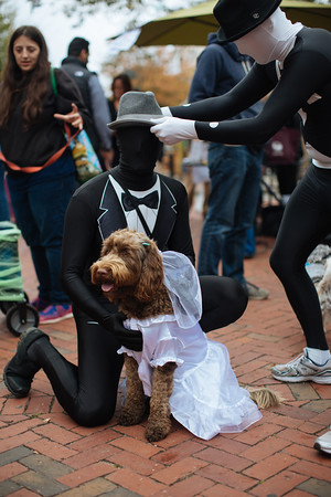 Jared Charney / Photo Percy & the Wedding Party at the Second Annual Howl-o-ween Pet Parade on Derby Square in Salem, October 2, 2016.