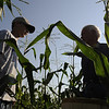 North Andover: At right, George Barker, 82, and his grandson Bill Barker, 14, pick corn on the Barker Farm along Osgood Street. The Barkers have been farming their land since 1642. Photo by Tim Jean/Eagle-Tribune Monday, August 18, 2008