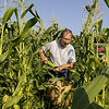 North Andover: Russell Whitney, 62, picks corn in field off Bradford Street. Photo by Tim Jean/Eagle-Tribune Friday, August 29, 2008