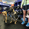 Clients at the Institute of Performance & Fitness are greeted by a friendly, enthusiastic pit bull named Abraham and most days, he's joined by fitness center companions Lyken, a German shepherd and Mangus, a bulldog.<br /> MARY SCHWALM/Staff photo.  12/19/12