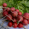 RYAN HUTTON/ Staff photo<br /> Red radishes from Gaouette Farm at the Andover Farmer's Market.