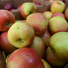 RYAN HUTTON/ Staff photo<br /> Ripe apples from Gaouette Farm at the Andover Farmer's Market.