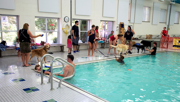 Dog swim at the Reading YMCA pool. The Pool was open to dogs and their owner to swim in just before it was scheduled to be washed. Owners paid $20 for a half hour swim with all proceeds going to the Annual Fund, which provide services at the Y to people who can afford them.