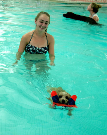 Kate Mignosa, 16, laugh as her dog Kneeli swim to the side with a toy at the Reading YMCA pool. The Pool was open to dogs and their owner to swim in just before it was scheduled to be washed. Owners paid $20 for a half hour swim with all proceeds going to the Annual Fund, which provide services at the Y to people who can afford them.