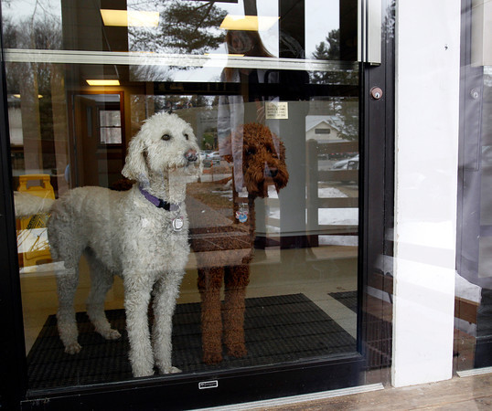 MARY SCHWALM/Staff photo Lily and Ruby wait for their owner Dr. Beth Shurland at the Reading Animal Clinic. 3/25/14