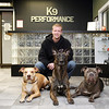MARY SCHWALM/Staff photo Steve Roberts, owner of K-9 Top Performance  in Reading, poses for  a photo with his dogs from left: Jordan, pit bull female-6, Fosco, dutch shepherd, male-3, Reggie, pit bull, male-4. 9/19/13