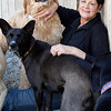 MARY SCHWALM/Staff photo Judy Basteri, owner of the Bed and Biscuit in Reading, is greeted by dogs as she sits on the ground in one of the dog play areas at the doggie daycare facility.  9/19/13