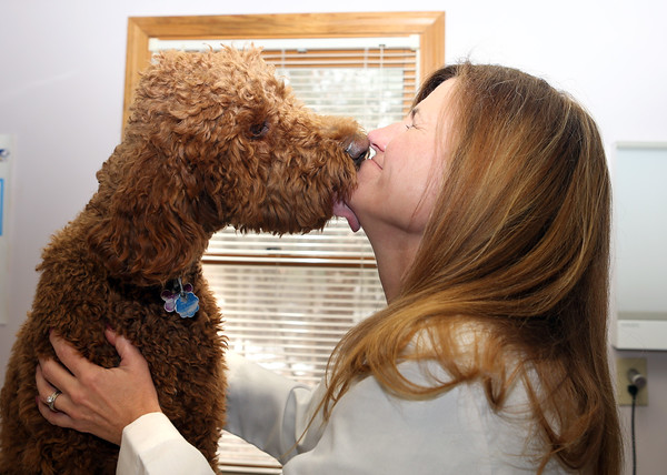 MARY SCHWALM/Staff photo Owner and Veterinarian Dr. Beth Shurland gets a kiss from her poodle Ruby at her practice at The Reading Animal Clinic.  3/25/14