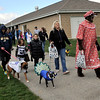 TIM JEAN/Staff photo  <br /> Participants walk in the dog costume parade during Windham Harvest Fest at Griffin Park. 10/17/15