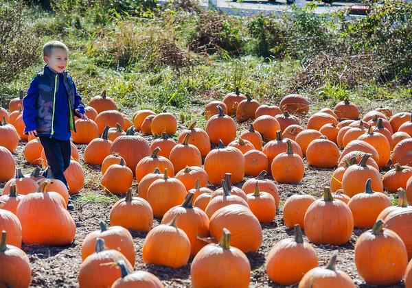 AMANDA SABGA/ Staff photo <br /> <br /> Jake Kistler, 5 of Windham, walks through the pumpkin patch at Crossing Life Church's PumpkinFest on Saturday afternoon. <br /> <br /> 10/10/15