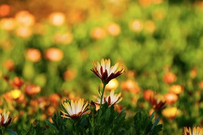 Flower on Orange and Green
