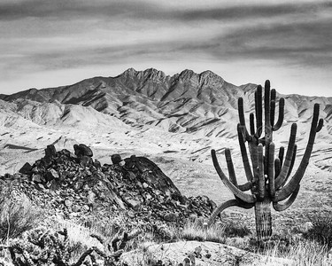 Four Peaks Mountain with the 32-armed Saguaro Cactus