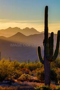 Saguaro Sunrise over Four Peaks Mountain