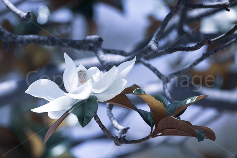 Gentle Blossom