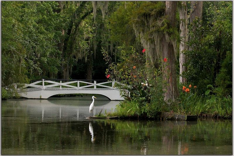 Magnolia Gardens before the rain came