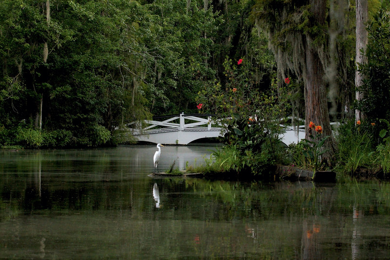 the egret stands on the garden in the water