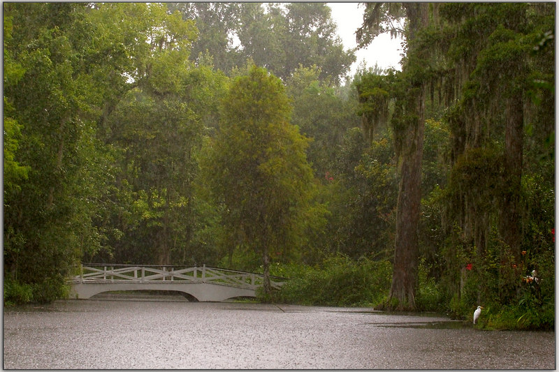 the rain pours.......and the egret stays.