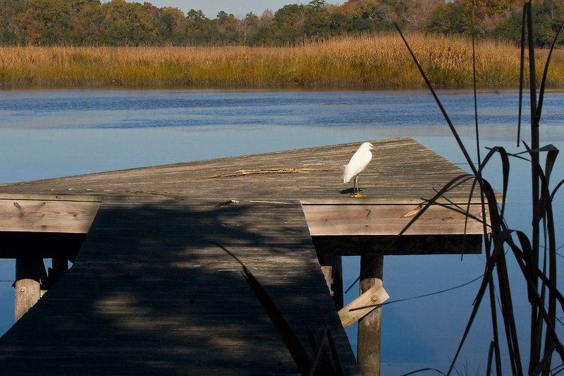 Private Dock, Snowy Egret pays that no mind..<br /> 11/27/2006