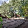 DSC_5634_garden
