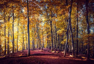 Pilisi erdő