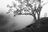 30x20 Hualalai mist