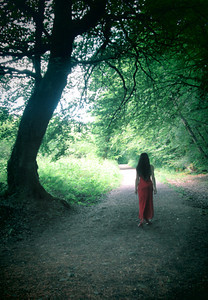 In the Mayo Woods
