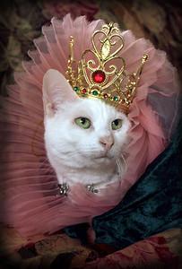 Queen Nellie
