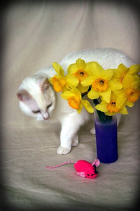 Nellie with Daffodils