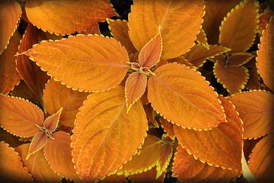Autumn at Longwood Gardens 5