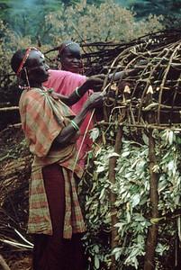 Building a Shamba