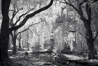 """The Enchanted Woods at Longwood"""