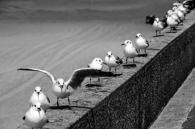 Seagulls on Wall
