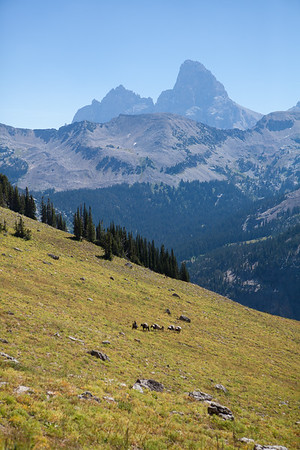 A pack string carries research and camp equipment in the high Tetons