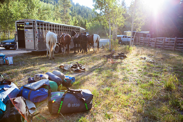 Packhorses are used to transport all of our equipment and food to a basecamp high in the mountains
