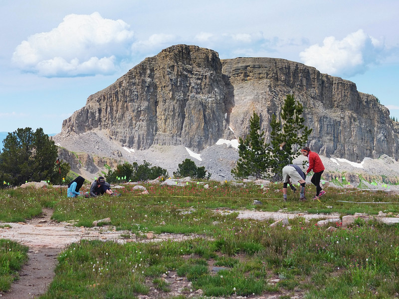 The Teton Archaeological Project team maps a 5,000 year old campsite above treeline. The mosquitos were so bad that it was nearly impossible to do paperwork.