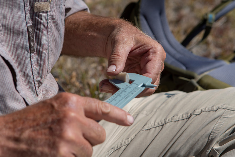 Dr. Richard Adams measures the base of a 9,000 year old paleoindian projectile point found near 11,500 feet.