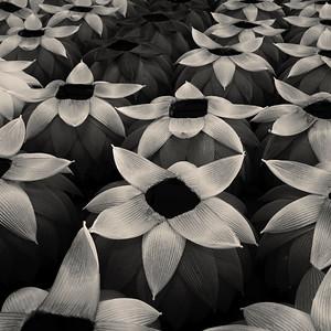 Paper lanterns, Seoul, Korea