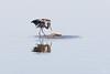 Great Blue Heron, Hagerman NWR