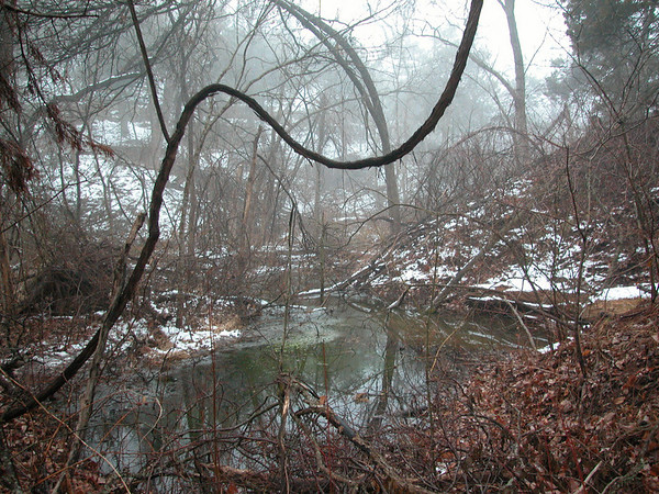 Foggy Over Pond in Snow